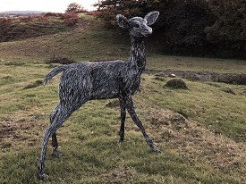 Life sized Fallow Deer made from stainless steel wire.