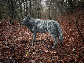 The third life sized Wolf, made from stainless steel wire